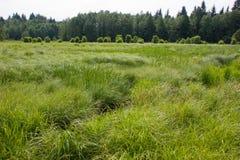 Prado pantanoso Imagens de Stock