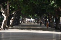 Prado (Paseo de Marti),哈瓦那,古巴 免版税图库摄影