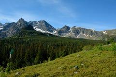 Prado, picos y árboles en el valle de Gasienicowa Imagen de archivo
