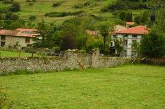 Prado protegido por un perro del guarda en Ruta del Camin Encantau en el consejo de Llanes Naturaleza, viaje, paisajes, bosques,  fotos de archivo