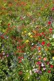 Prado salvaje del verano por completo de centenares de flores salvajes Foto de archivo