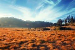 Prado seco en el paisaje de la montaña Fotos de archivo