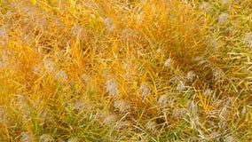 Prado seco no outono Fotografia de Stock