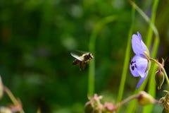Prado soleado con las flores y la abeja Imágenes de archivo libres de regalías