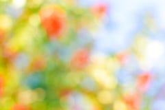Prado soleado del flor del verano como floral borroso Fotos de archivo