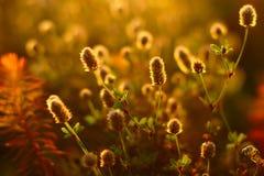 Prado soleado del otoño Fotos de archivo