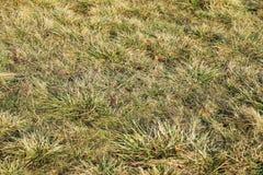 prado Textura del fondo de la sabana de la hierba secada Imágenes de archivo libres de regalías