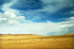 Prado tibetano fotos de stock royalty free