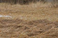 Prado vazio com um grupo do feno seco e da grama marrom Imagens de Stock