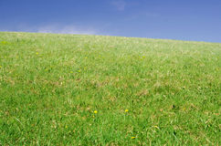 Prado verde Imagen de archivo libre de regalías