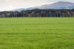 Prado verde fotografia de stock