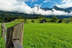 Prado verde Imagens de Stock