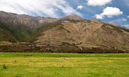Prado verde alpino Imagem de Stock Royalty Free
