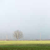 Prado verde bonito na névoa pesada Fotografia de Stock Royalty Free