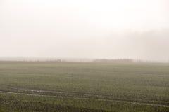 Prado verde bonito na névoa pesada Imagens de Stock