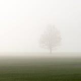 Prado verde bonito na névoa pesada Fotos de Stock Royalty Free