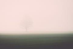 Prado verde bonito no vintage pesado da névoa Imagens de Stock