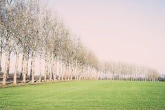 Prado verde bonito no vintage pesado da névoa Fotos de Stock Royalty Free