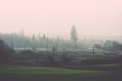 Prado verde bonito no vintage pesado da névoa Fotografia de Stock Royalty Free
