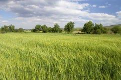 Prado verde com árvores e nuvens Imagens de Stock Royalty Free