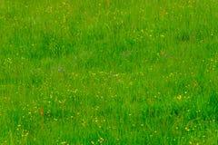 Prado verde com flores coloridas foto de stock