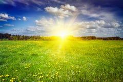 Prado verde com grama no verão Foto de Stock