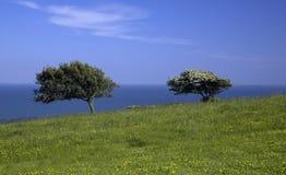 Prado verde con el mar de 2 árboles Fotografía de archivo
