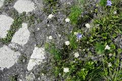 Prado verde con las flores y los guijarros Imagenes de archivo