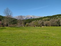 Prado verde con las vacas y las montañas de Sierra de Gredos en el fondo, en un día de primavera fotos de archivo libres de regalías