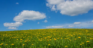 Prado verde con los dientes de león y el cielo con las nubes Imagen de archivo