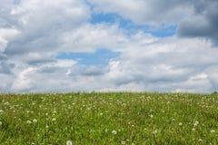 Prado verde con los dientes de león y el cielo con las nubes Imagen de archivo libre de regalías