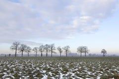 Prado verde con los remiendos de la nieve y de la hilera de árboles cerca de Wageningen fotografía de archivo