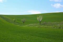 Prado verde da mola Imagem de Stock Royalty Free