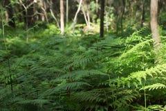 Prado verde de la hoja del helecho del bosque Imagen de archivo libre de regalías