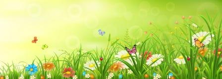 Prado verde de la primavera o del verano fotografía de archivo
