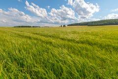Prado verde debajo del cielo azul con las nubes imagenes de archivo