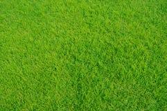 Resultado de imagen de prado de verde primavera