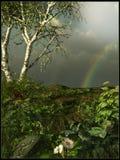 Prado verde después de la lluvia Imagen de archivo libre de regalías