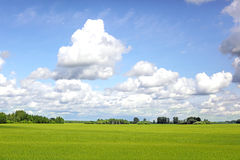 Prado verde do verão Fotos de Stock