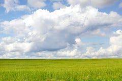 Prado verde do verão Imagens de Stock Royalty Free