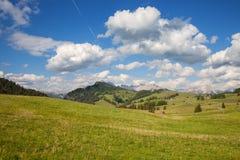 Prado verde do verão Imagem de Stock