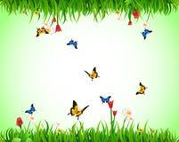 Prado verde do verão Imagem de Stock Royalty Free