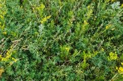 Prado verde do verão. fundos rurais da natureza Fotos de Stock