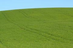 Prado verde e céu azul Foto de Stock