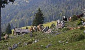 Prado verde en montañas y vacas imagen de archivo