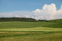 Prado verde en Polonia Fotos de archivo
