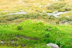Prado verde en un área montañosa Fotografía de archivo