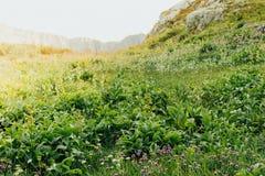 Prado verde en un área montañosa Foto de archivo libre de regalías