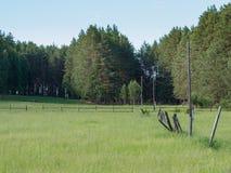 Prado verde na borda da floresta Imagem de Stock Royalty Free