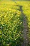 Prado verde na luz do sol Fotos de Stock Royalty Free
